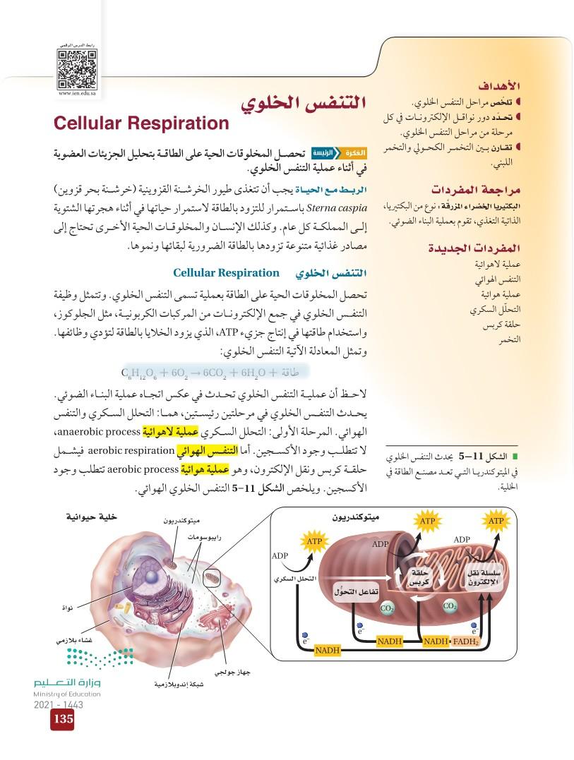 5-3 التنفس الخلوي