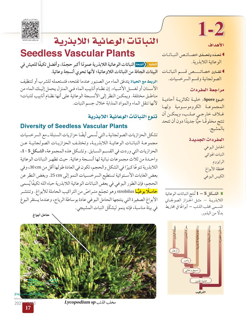 1-2 النباتات الوعائية اللابذرية