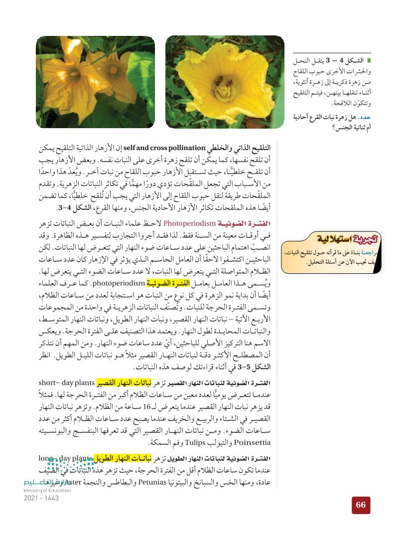 3-1 : الأزهار