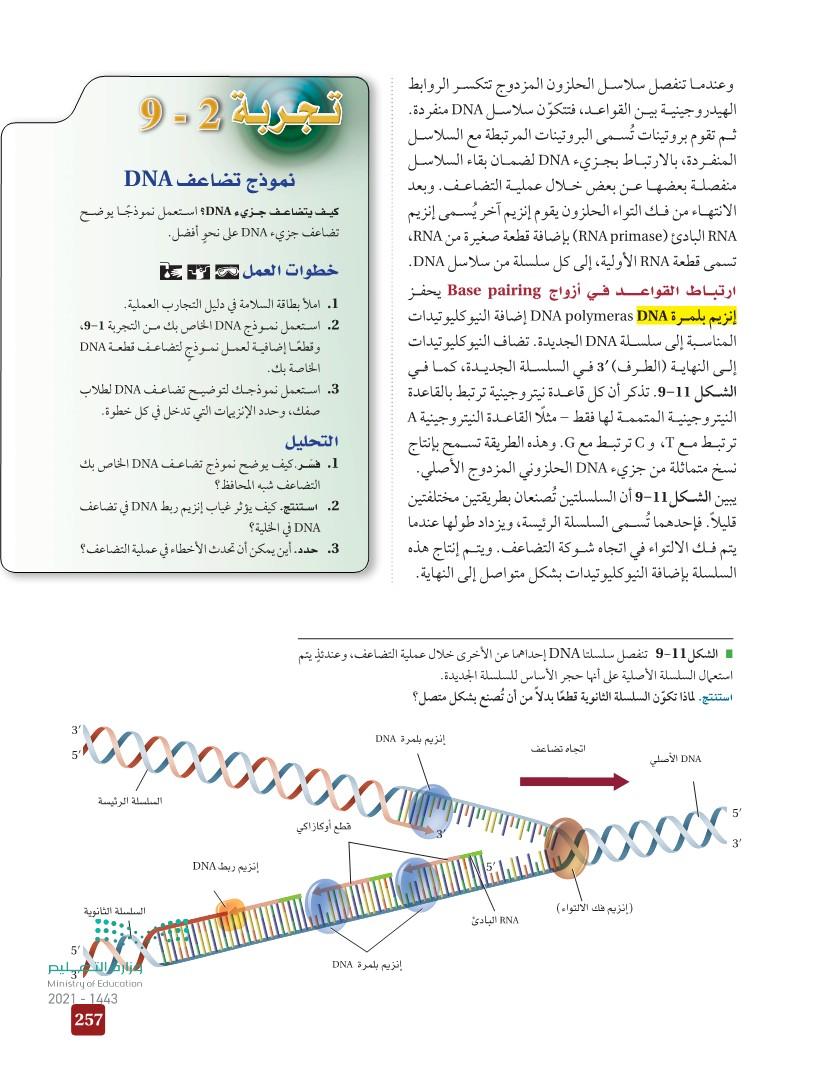 9-2 تضاعف DNA