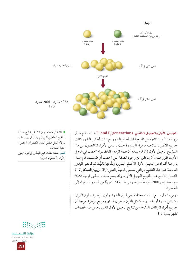 7-2 الوراثة المندلية