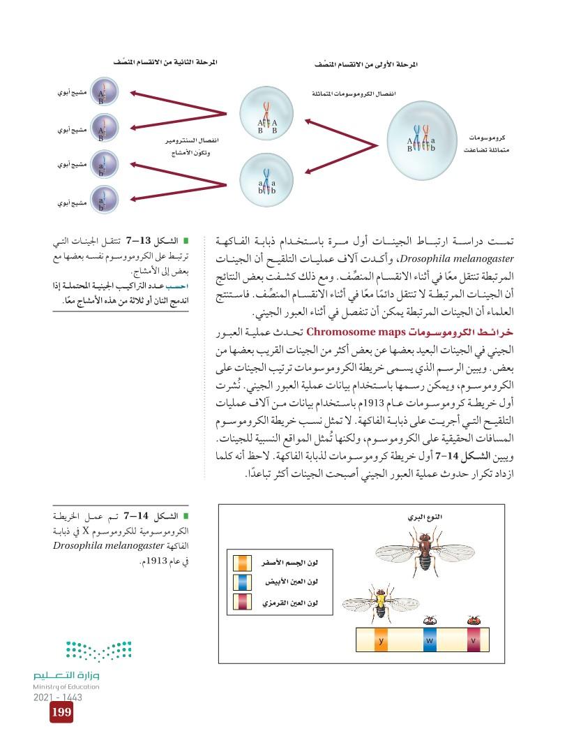 7-3 ارتباط الجينات وتعدد المجموعات الكروموسومية