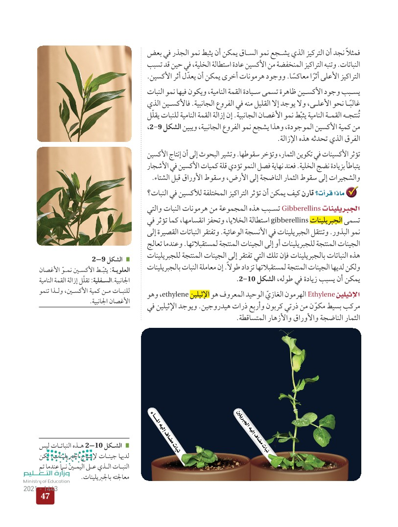 2-2 هرمونات النباتات واستجاباتها