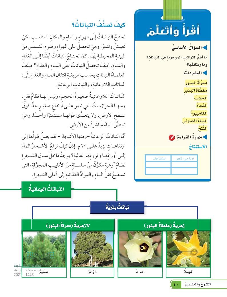 الدرس الثاني: النباتات